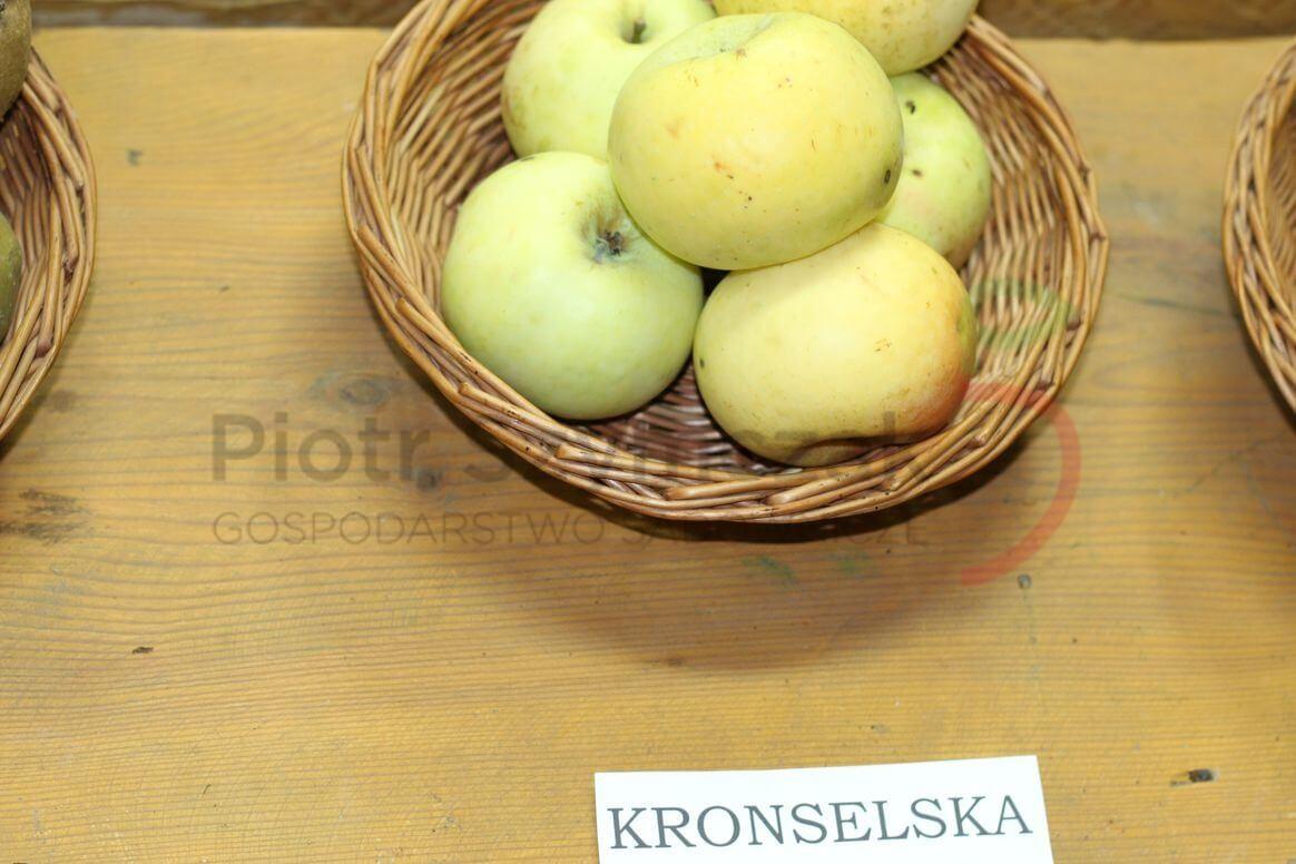 Kronselskie, Kronselka