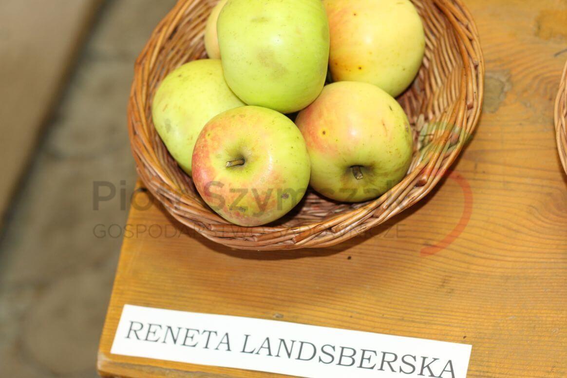 Malus domestica 'Landsberska'