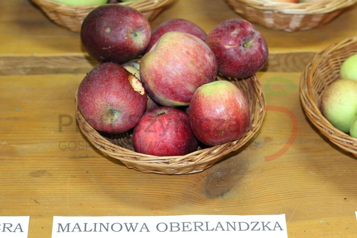 Malus domestica 'Malinowe Oberlandzkie'