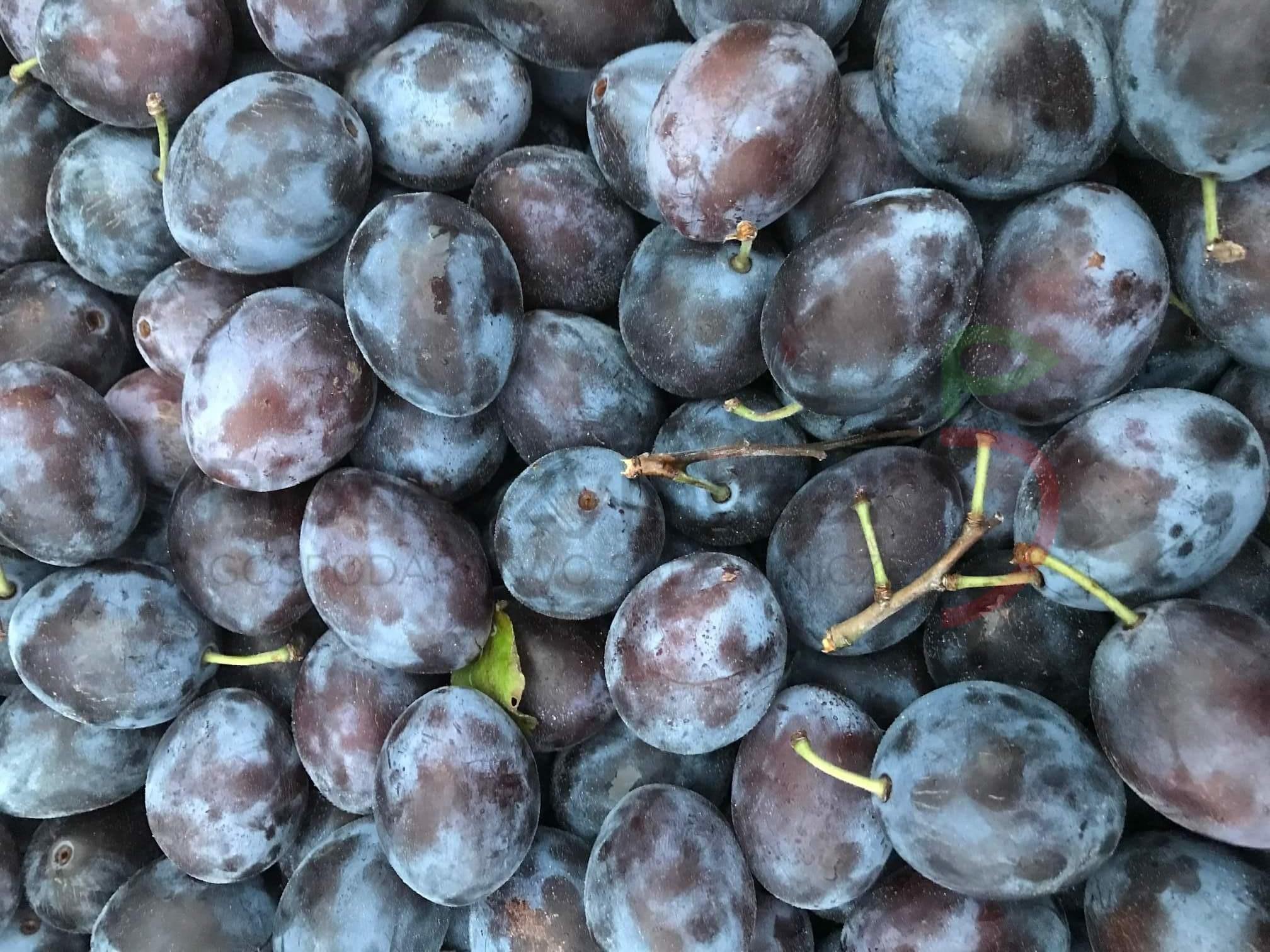 Prunus domestica 'Węgierka Zwykła'